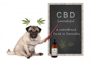 Auch ihre Haustiere können von dem nicht psychoaktiven CBD profitieren